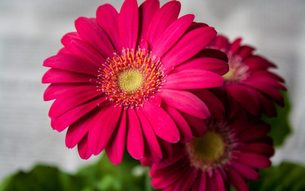 【花言葉】ありがとうを伝えるおすすめの花10選